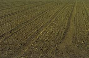 territorio agricolo lodigiano-caseificio zucchelli